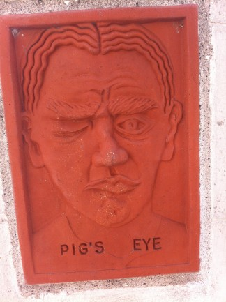 Pigs Eye Close UP