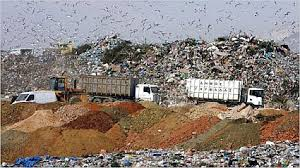 Garbage City Gulls